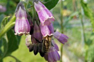 Buchrezension: Die Weisheit der Bienen von Jack Mingo