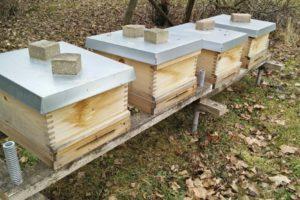 Ungebetene Gäste am Bienenstand