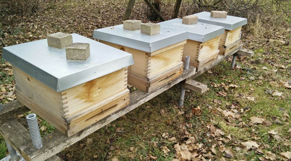 Bienenstand Suchbild