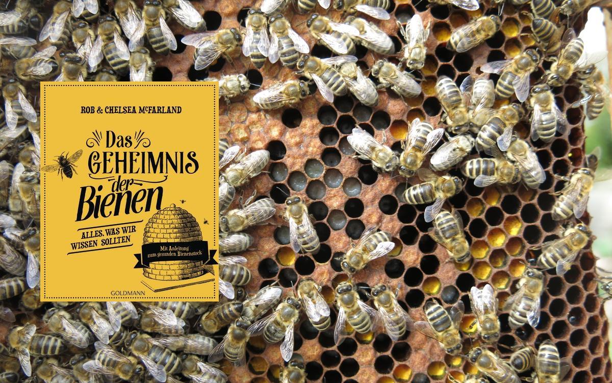 Buchrezension: Das Geheimnis der Bienen von Rob & Chelsea McFarland