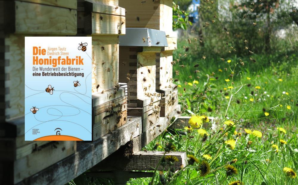 Die Honigfabrik: Die Wunderwelt der Bienen – eine Betriebsbesichtigung (Buchrezension)