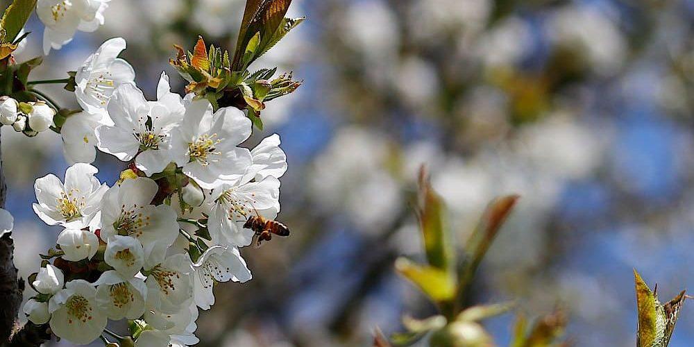 PR-Aktion von Penny zum Thema Bienensterben – Ein paar Gedanken dazu