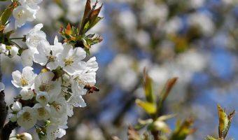 Artikelbild Bienensterben Penny PR Aktion