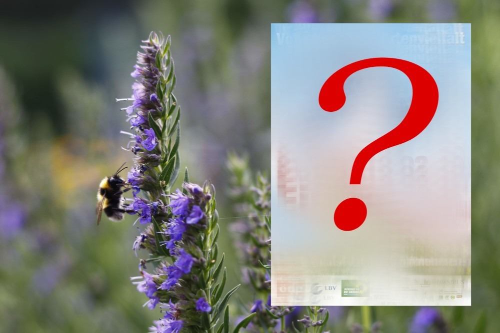 Artikelbild Volksbegehren Artenvielfalt Rettet die Bienen