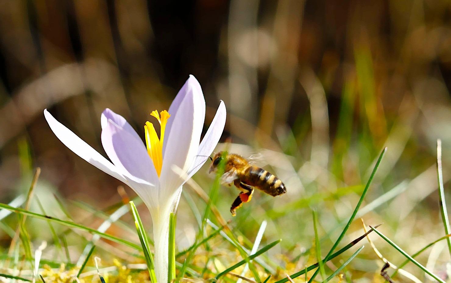 Artikelbild Vorbereitungen für das Frühjahr - Rähmchen drahten - Umfrageergebnisse Newsletter